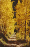 Lewis Creek is a mountain stream that starts on Lewis Mountain and flows down to the La Plata River. In the Fall, the quaking aspens provide a spectacular show of gold and red colors. Click to enlarge Lewis Creek Road